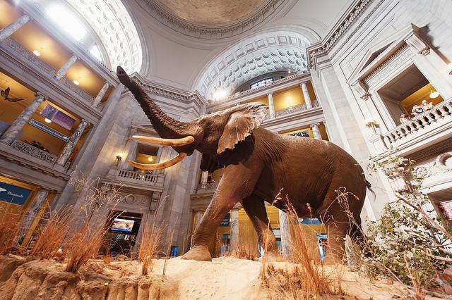 Best Museums in Washington, D.C.