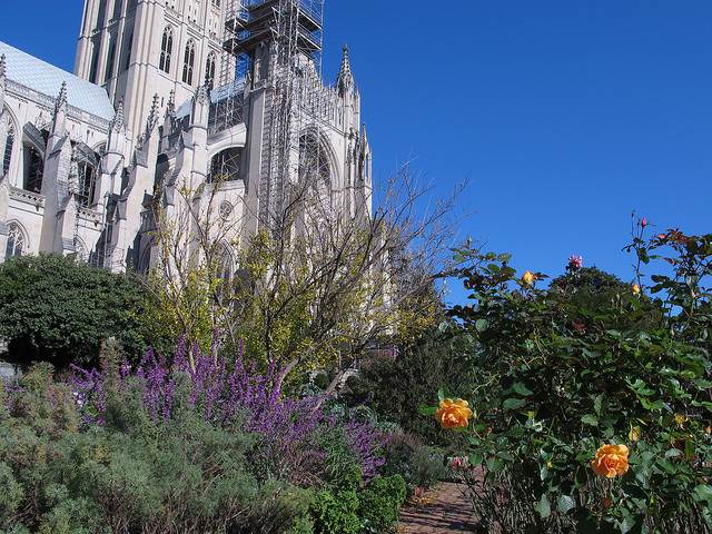 bishop's garden at the national cathedral in november