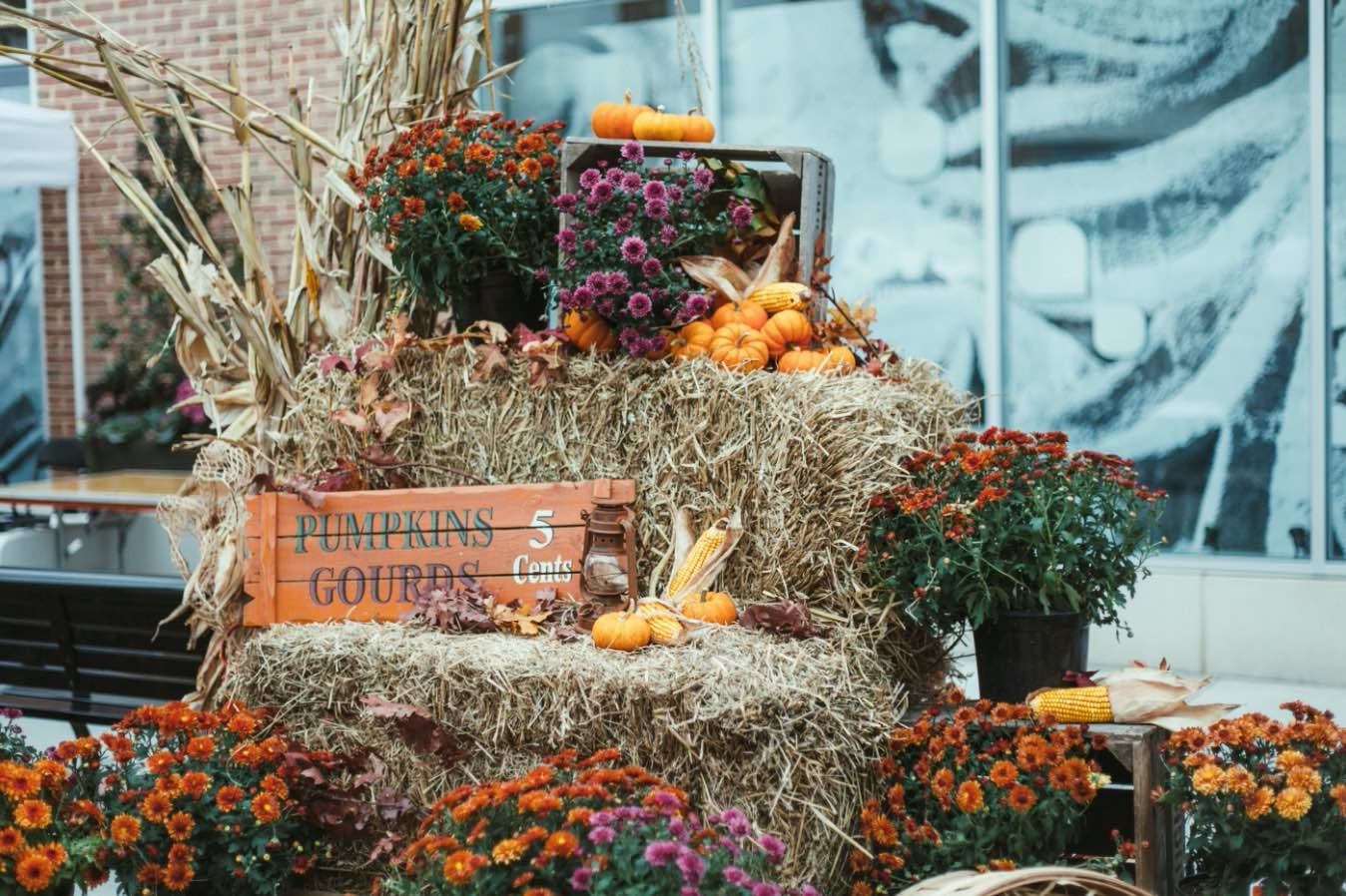 VIDEO from The Cathedral Heights Fall Festival
