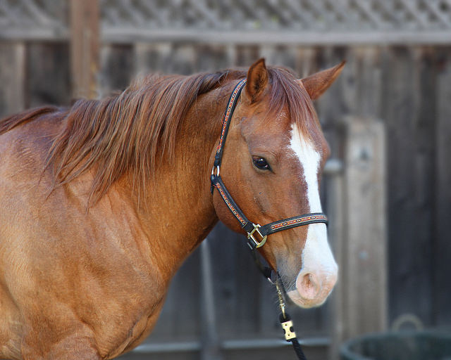 Go for a Trail Ride at Rock Creek Park Horse Center