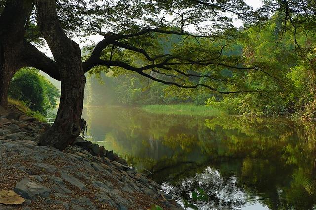 Don't Wait Until Spring to Explore the Kenilworth Park & Aquatic Gardens