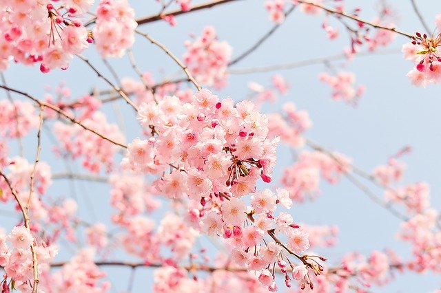Fun Facts About the Spring Equinox
